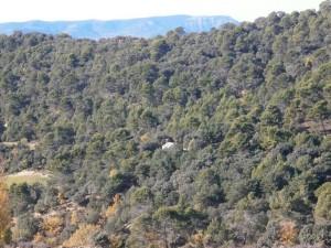 Llegando a La Tobeña, ya se aprecia la ermita de igual nombre en medio de la vegetación arbórea