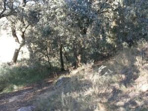 Camino Piedra de los Moros