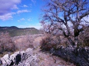 Camino enlosado, flanqueado por muros de piedra