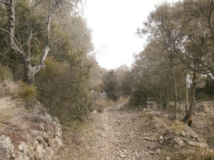 "Camino de subida a ""Purroy viejo"""