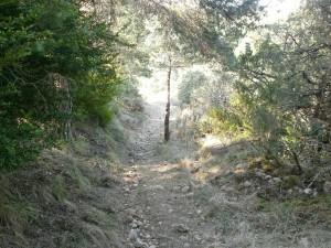 Senda de subida a la sierra del Arbe