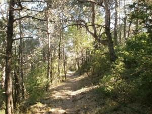 Camino de la ermita de San Victorián