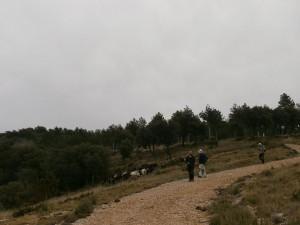 En el Alto de la Carrasca. Cabras asilvestradas