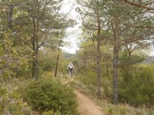 Atravesando el pinar, camino de La Tamara