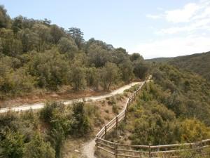 Camino Bierge. Unión senda con pista adaptada