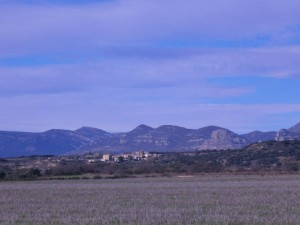 Barluenga