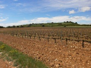 Camino de Adahuesca. Plantaciones de viñedos