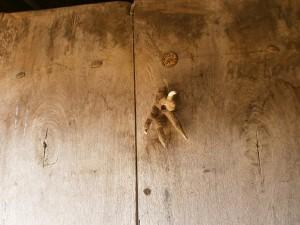 San Saturnino. Garra de ave rapaz clavada en una puerta