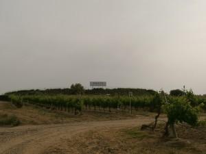 Barbastro. Plantaciones de viñedos