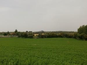 Barbastro. Campos de alfalfa con los nuevos regadíos