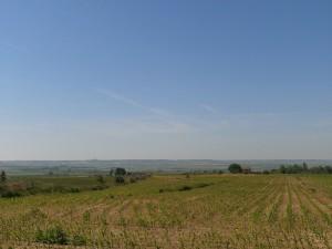 Albelda. Campos de maíz