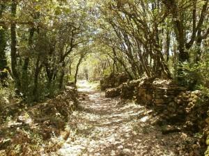 Betorz. Camino de Lecina