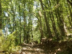 Camino de Castejón de Sos