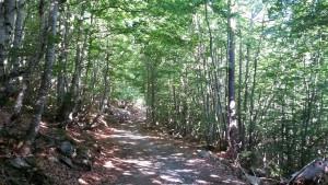 Hayedo, camino del refugio. Valle de Estós