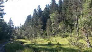 Arbolado Valle de Estós