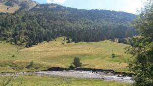 Praderas en el valle de Estós