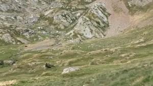 En el fondo del valle, vacas pastando