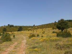Camino de Santa Lucía. Pradera con erizon