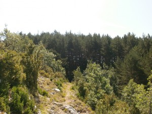 Senda entre pinares, Alto de Bonansa