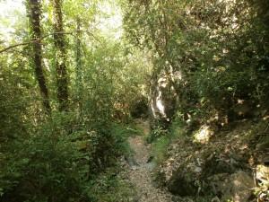 Camino de Sahún, bajando a Guayente