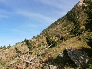 Camino del Pla d'Estañ. Restos de aludes