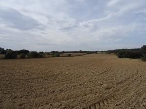 Ponzano. Llanos de San Román