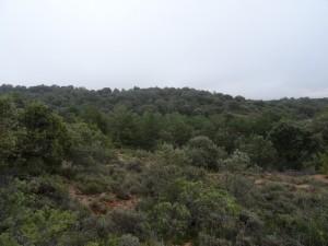 Camino de Sagarras Altas