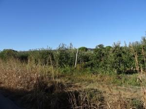 Monte Odina. Plantación de frutales