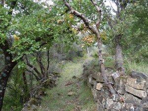 Camino San Juan de Toledo de la Nata