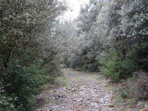 Antiguo camino empedrado de subida a San Victorián