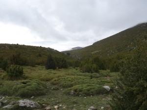 Camino de Otín. Abunda el erizón