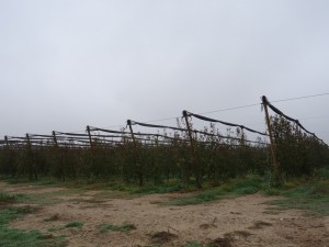 Fonz - Cofita. Árboles frutales