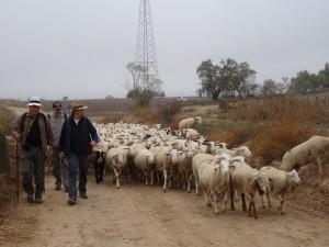 """Fonz - Cofita. """"Nuevos pastores"""""""
