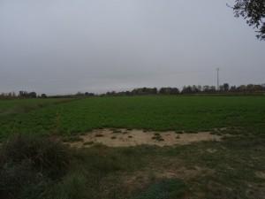 Campos de cultivo. Afueras de Huesca