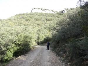 Camino del Mesón de Sevil