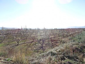 Camino de Valcarca. Campo de frutales