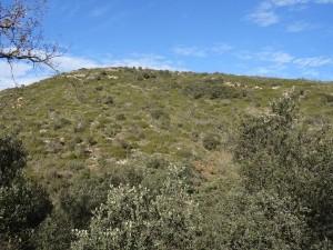 Camino San Quílez. Zona quemada año 2006