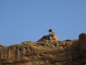 Alberuela de Tubo. Plataforma para nido de cigüeñas