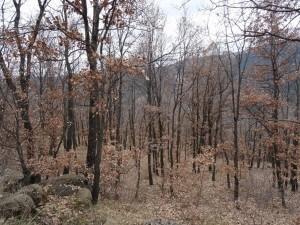 Bosque de quejigos, camino de Villacarli