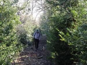 Camino de Betesa