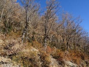 Bosques de quejigos