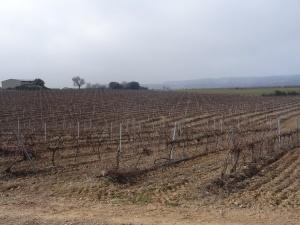 Artasona. Plantaciones de viñedos
