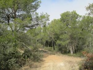 Camino de Baldellou