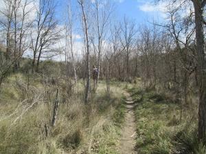 Senda camino de Castillazuelo