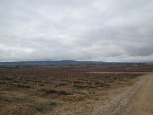 Villanueva de Sigena. Plantaciones de árboles frutales
