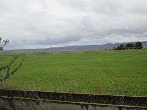 Camino de Alcolea de Cinca. Campos de cultivo