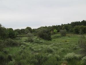 Camino de Finestras. Antiguas fincas de cultivo