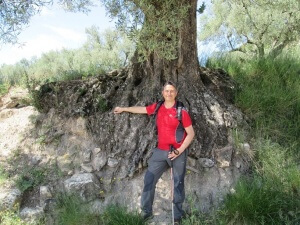 Alins de Monte. Buen ejemplar de olivo