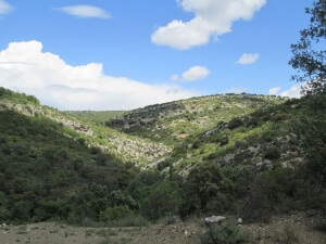 Camino de Calasanz