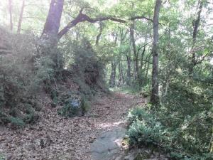 Camino de subida a Eresué